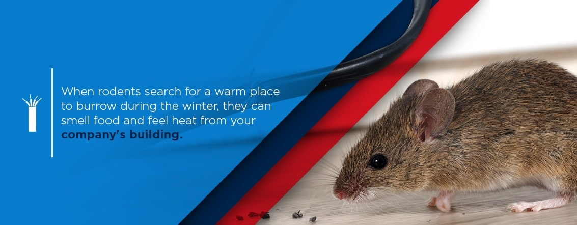 when rodents search for a warm place to burrow during the winter, they can smell food and feel heat from your company's building