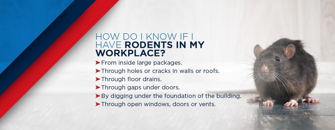 how to know if you have rodents in your workplace